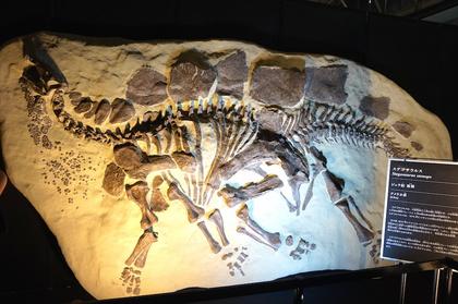 2年前恐竜展4.jpg