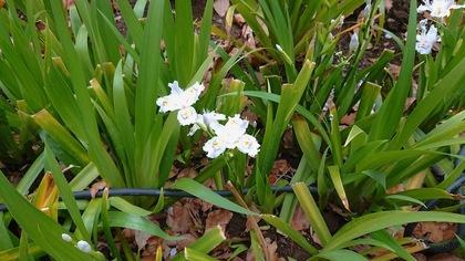 上野の花1.JPG