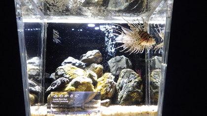 京都水族館2.jpg