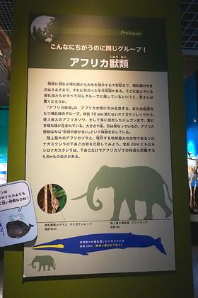 哺乳類1-1.jpg