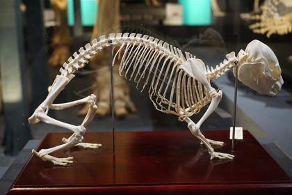 哺乳類1-2.jpg