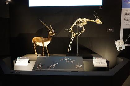 哺乳類10.jpg