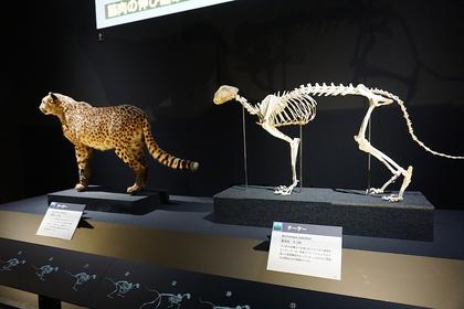 哺乳類7.jpg