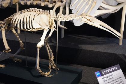 哺乳類8.jpg