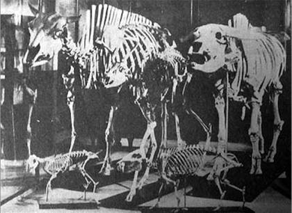 哺乳類9-1.jpg