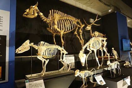 哺乳類9.jpg