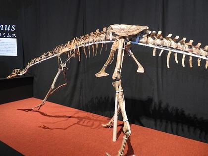 恐竜博10.jpg