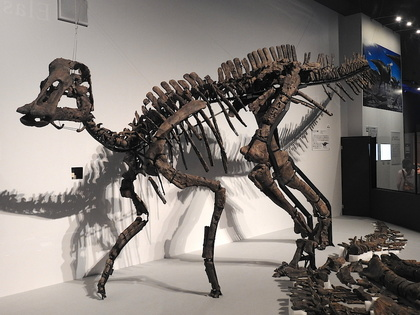 恐竜博16.jpg