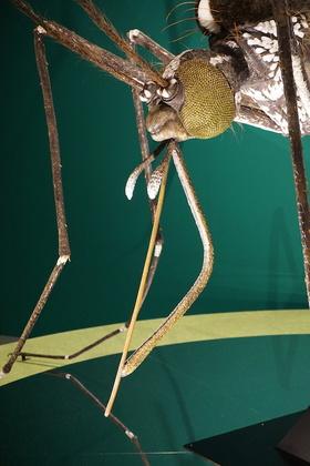 昆虫11.jpg