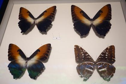 昆虫14.jpg