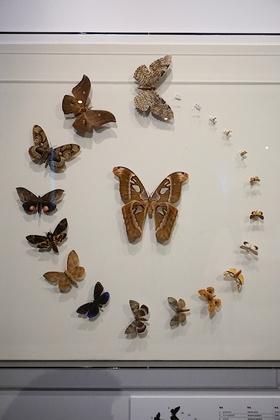 昆虫16.jpg