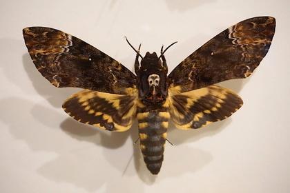 昆虫17.jpg