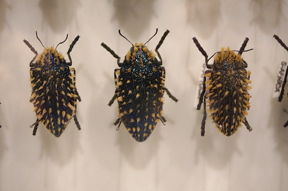 昆虫19.jpg