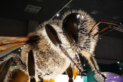 昆虫2.jpg