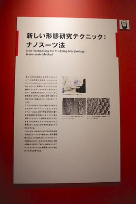 昆虫29-1.jpg