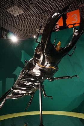 昆虫3.jpg