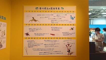 昆虫31.JPG