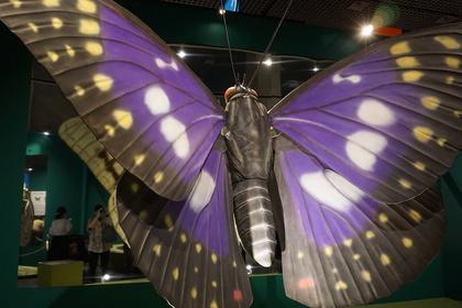 昆虫7.jpg