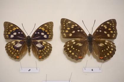 昆虫8.jpg