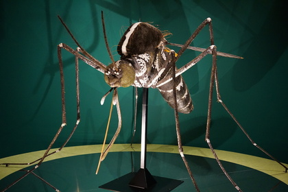 昆虫9.jpg