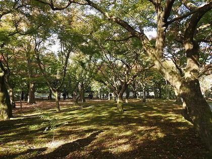 東福寺6.jpg