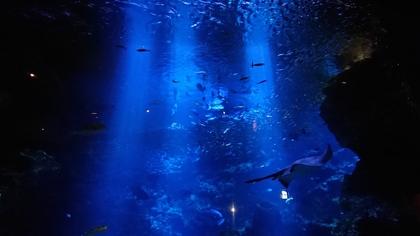 水族館10スマホ.jpg