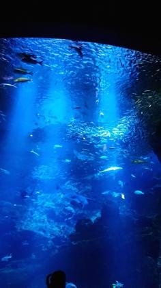 水族館11スマホ.jpg