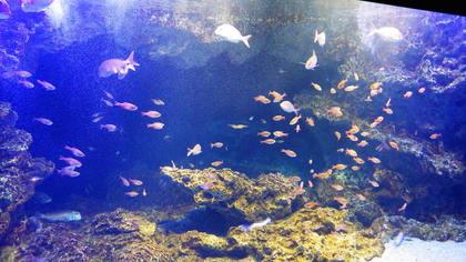 水族館16リコー.jpg