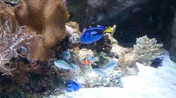 珊瑚礁の魚.jpg